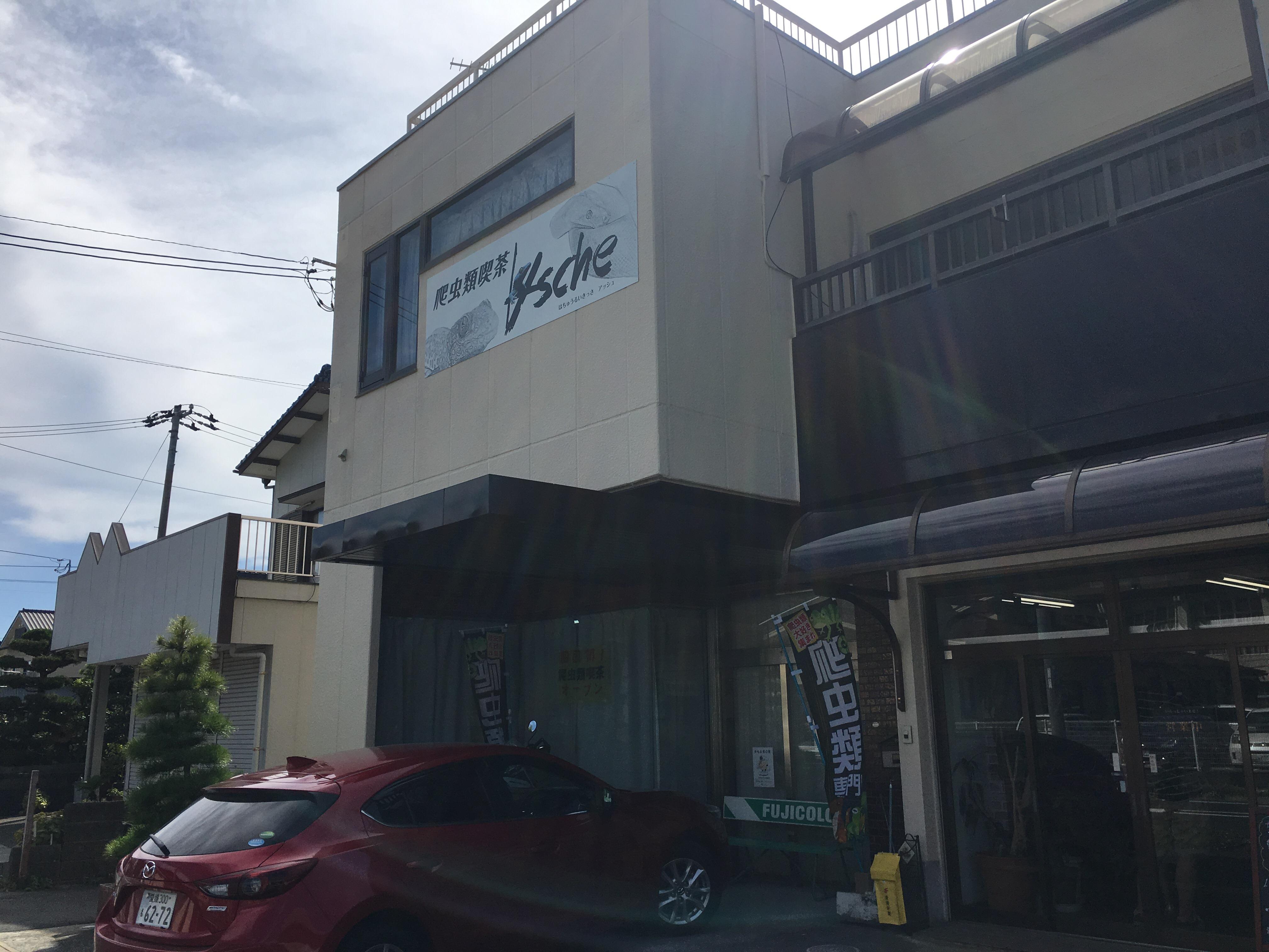 【閲覧注意】四国初!八幡浜市保内町に誕生した爬虫類喫茶「ASHE」(アッシュ)に行ってみた!