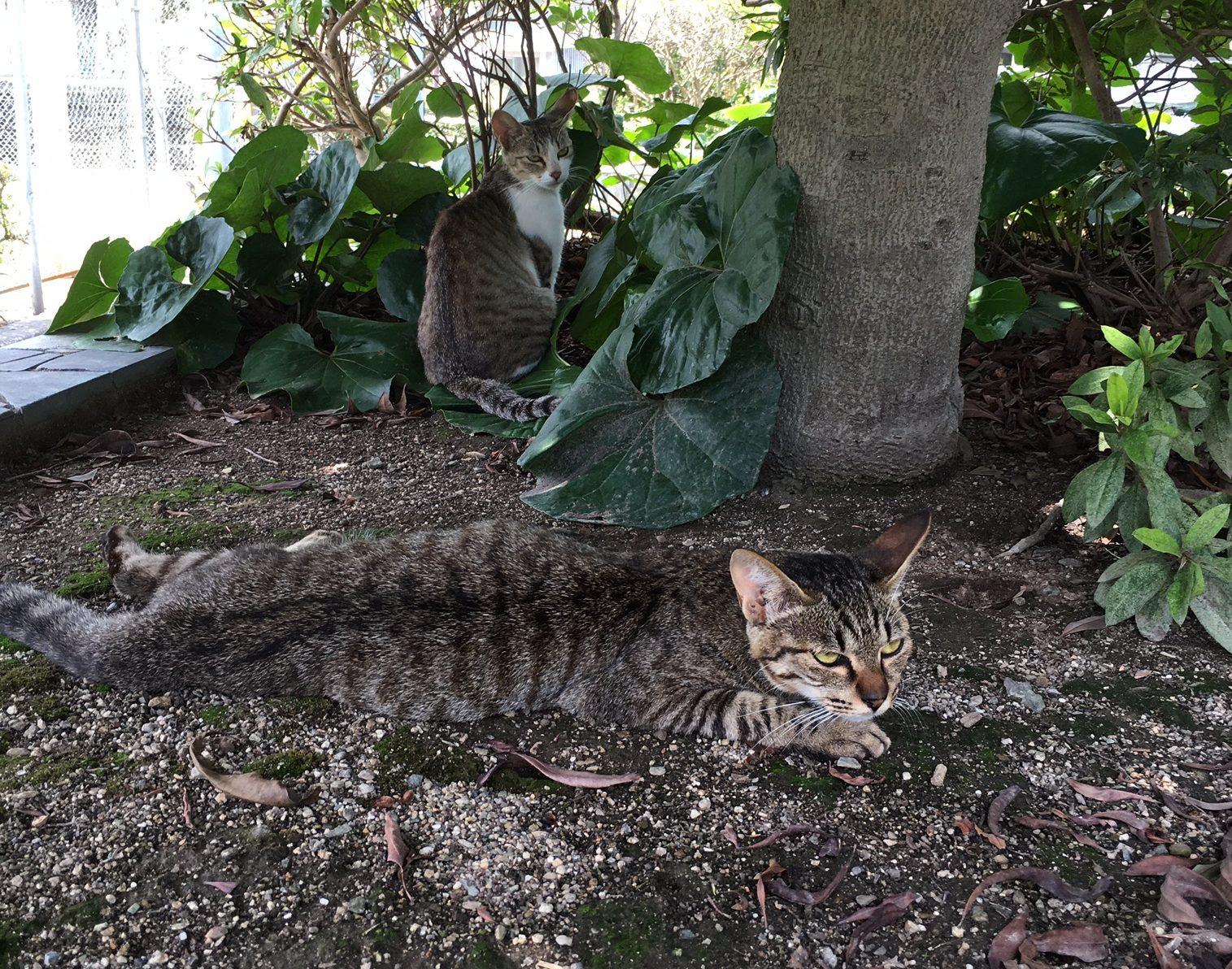 猫好きにはたまらない!八幡浜で猫がいる「北浜公園」に行ってきました!