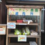 日替わりの野菜が買える!無人販売「フォーチュン農園直売所」に行ってきたよ!(前編)