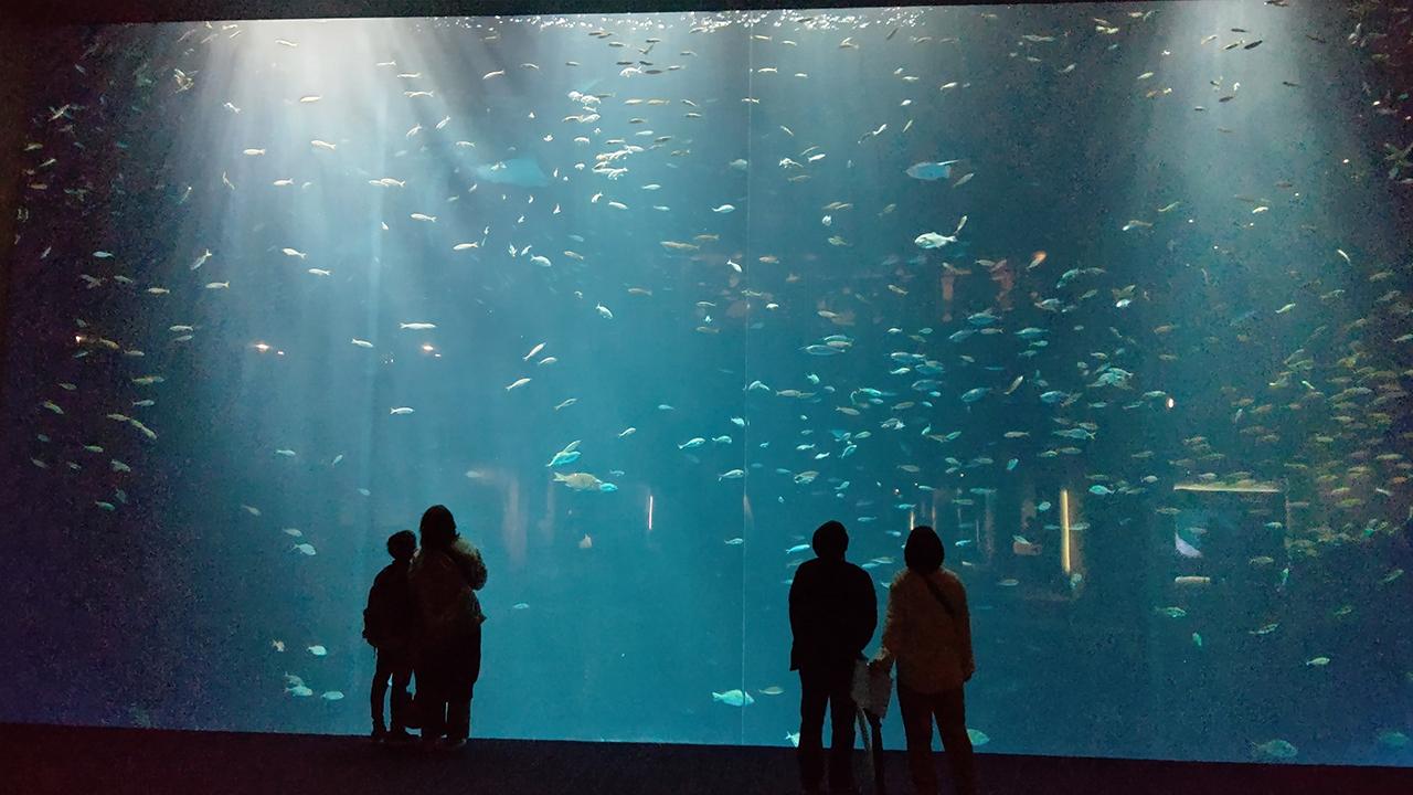 超最速レポート!実は愛媛も知れる「四国水景」がコンセプトの「四国水族館」に行ってきたよ!
