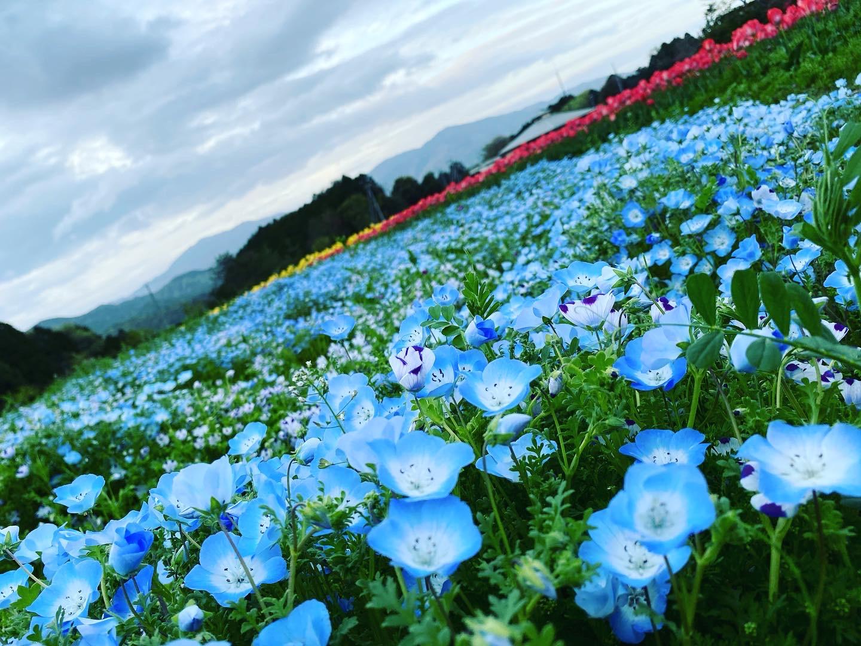 大洲市の春の観光はここ!綺麗すぎるお花のビュースポットを紹介します!