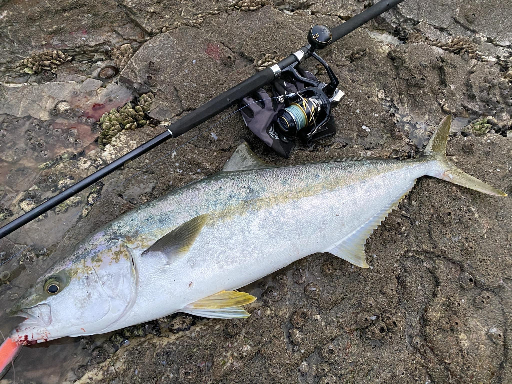 釣り人の聖地!釣りの魅力と愛媛県南予地域の豊かな海を紹介します!